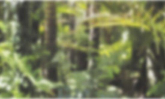rainforest-78516-07