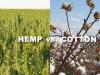 ヘンプ vs. コットン